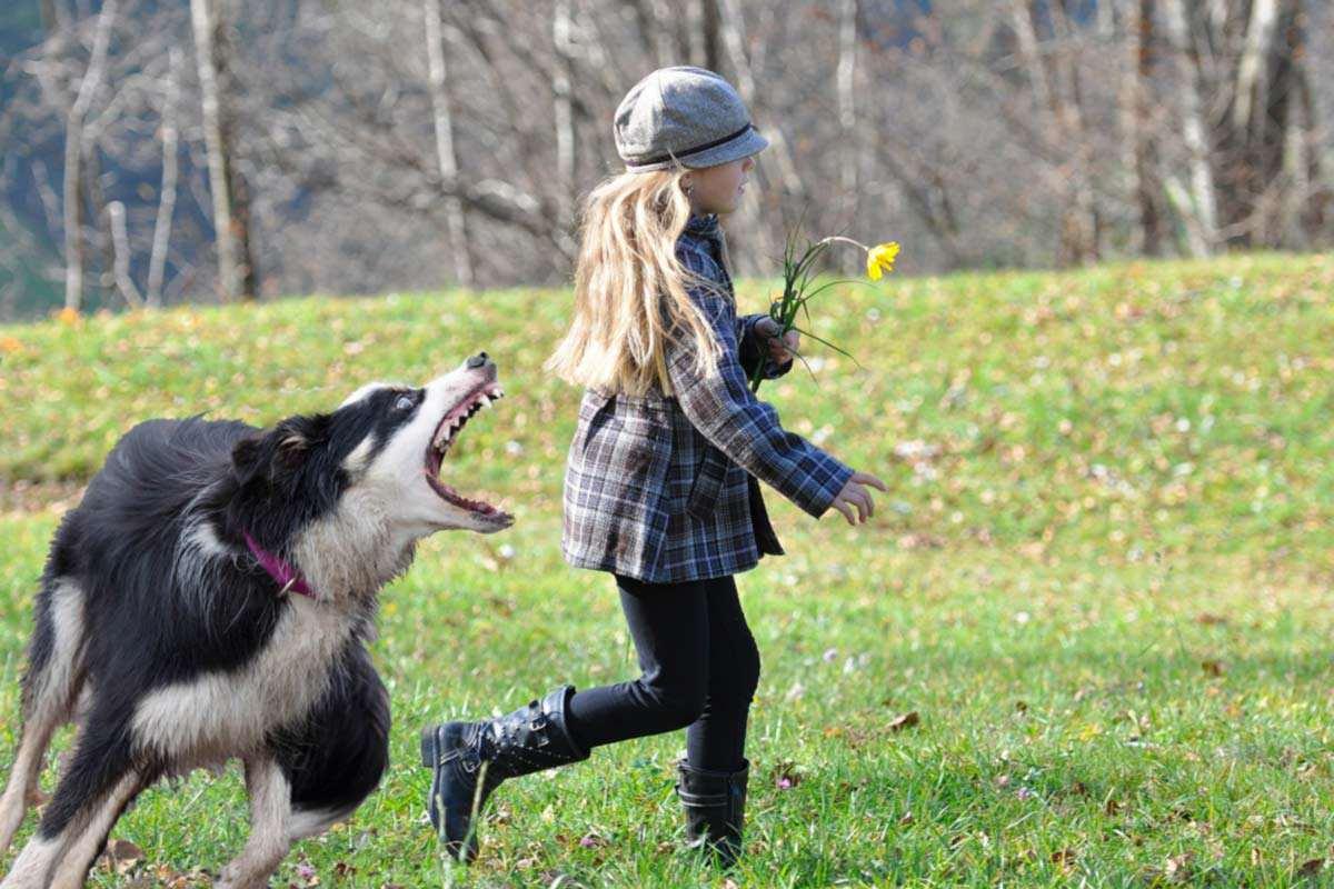 Erlaubt Hunde Pfefferspray Gegen